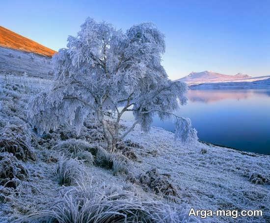 درختان بدون برگ در زمستان
