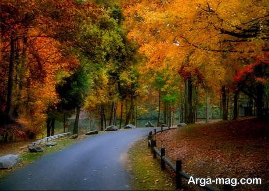 درخت های پاییزی جاده