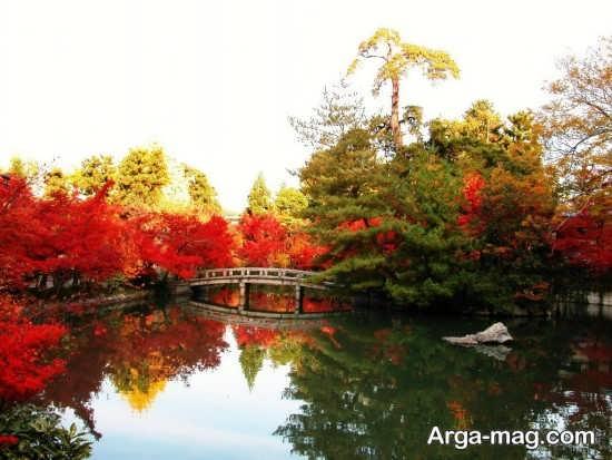 درختان دریاچه ای