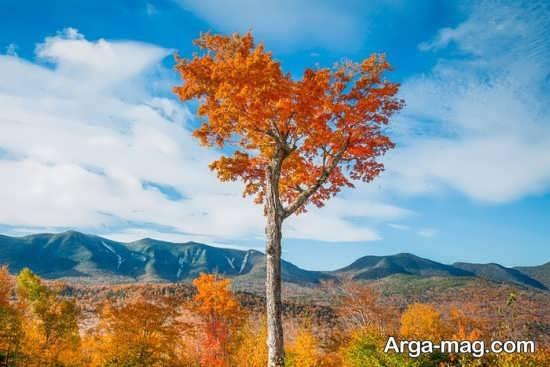 درخت پاییزی به شکل قلب
