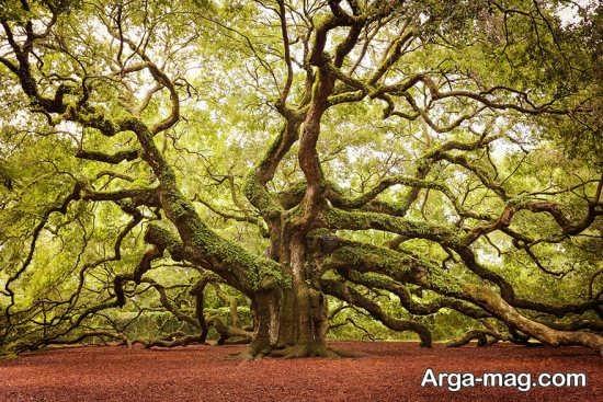درختان منحنی شکل زیبا