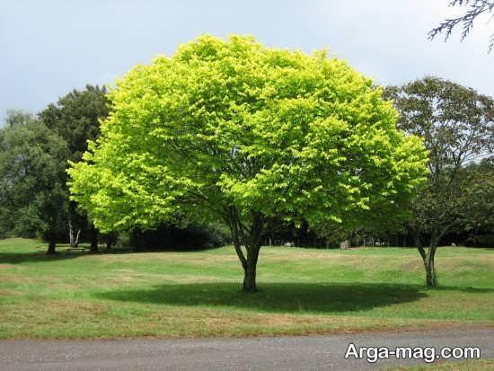 عکس درختان زیبا در تابستان