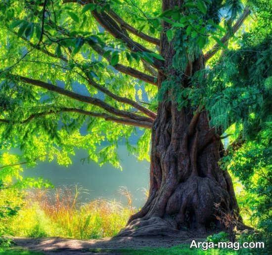 درختان تابستانی خاص و قشنگ