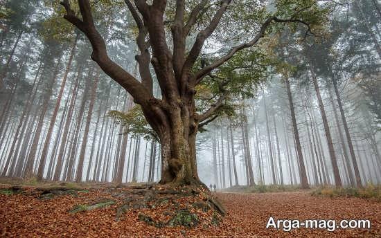 درخت های زیبا در برزیل