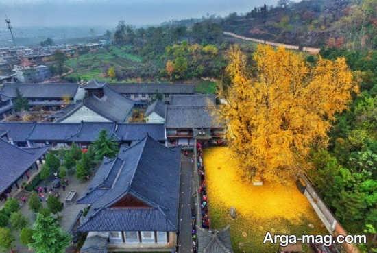 درختان پاییزی چین