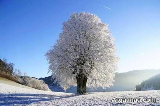درختان زمستانی ویژه