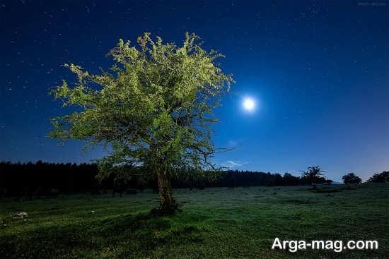 درخت زیبا در شب