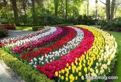 پرورش گل لاله