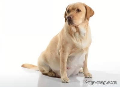 دوران بارداری سگ