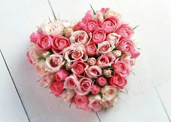 پروفایل گل های رز صورتی