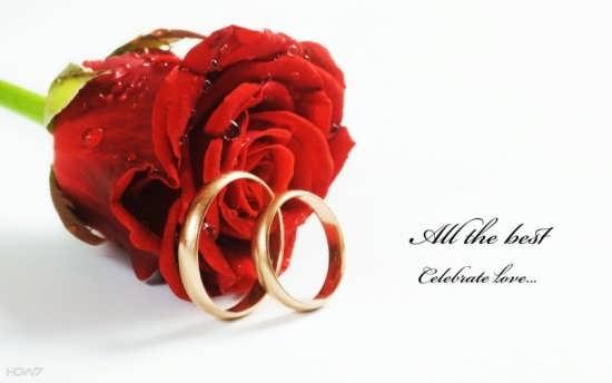 عکس گل رز مناسب برای پروفایل