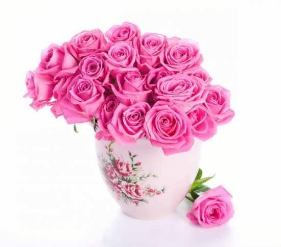 عکس پروفایل دیده نشده گل رز
