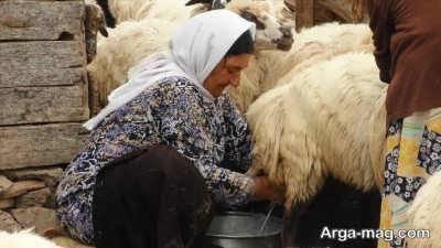 نقش شیر گوسفند در سلامتی انسان