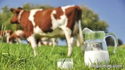 فواید بالای شیر گوسفند