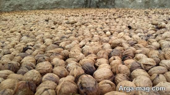 محصولات آذرشهر
