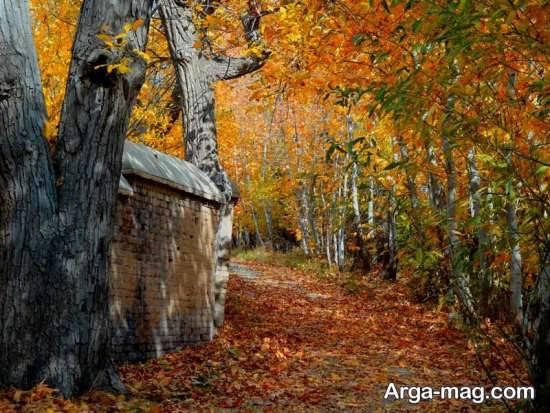 جنگل های زیبای بروجرد