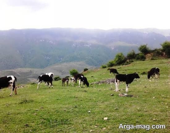 روستایی در گرگان