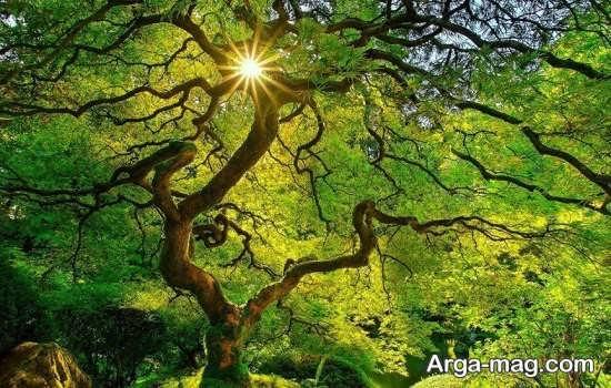 عکس درخت تابستانی زیبا
