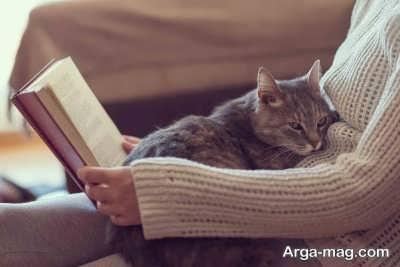 مراقبت از گربه