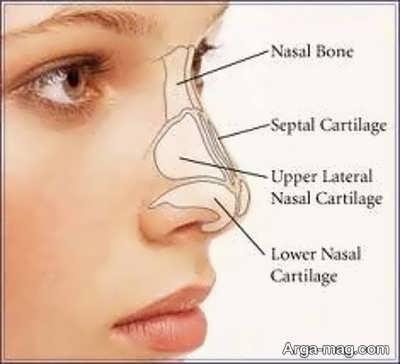 ساختار تشکیل دهنده بینی