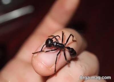 تعبیر دیدن مورچه در خواب از دیدگاه معبران مختلف