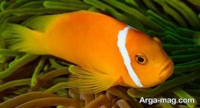 تعبیر دیدن ماهی در خواب