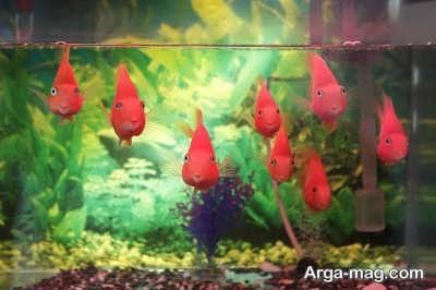 دیدن ماهی قرمز در خواب