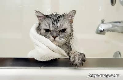 نگه داری و حمام گربه