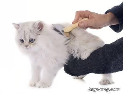 نگه داری و بهداشت گربه