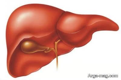 نشانه های کبد سالم و روش های برای سم زدایی این عضو بدن