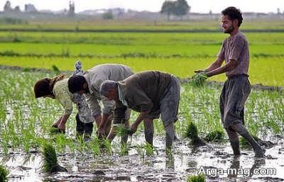 نشانه هایی برای شناسایی برنج خوب