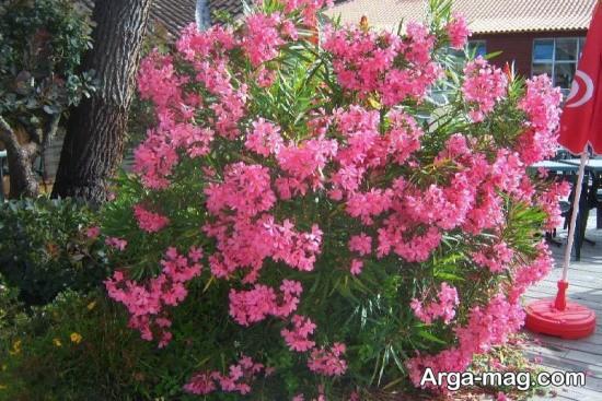 گل های صورتی زیبا