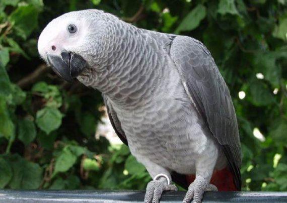 عکس کاسکو پرنده ای زیبا و دوست داشتنی