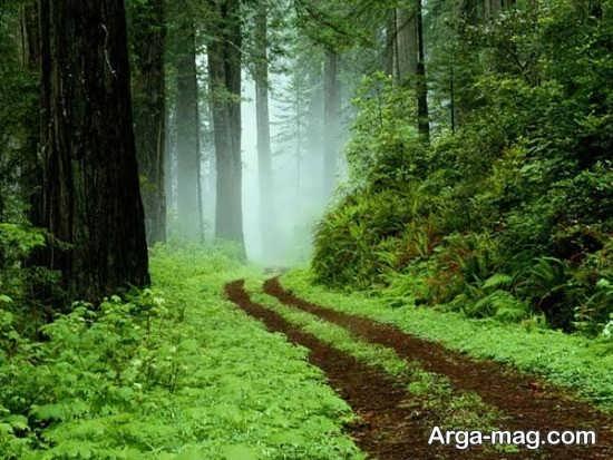ماسال و پارک جنگلی