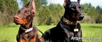 آموزش دادن به سگ خانگی