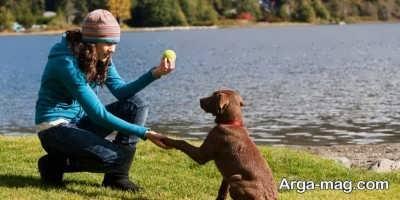 تربیت راحت سگ