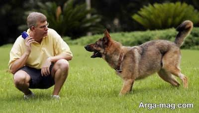 تربیت سگ در انواع نژادها