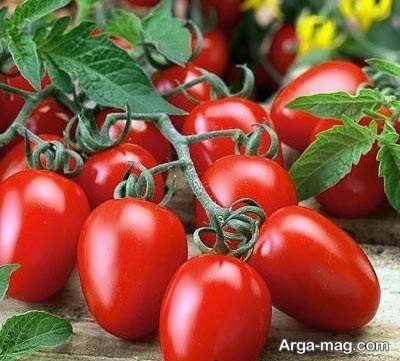 گوجه فرنگی با کیفیت و پرورش آن