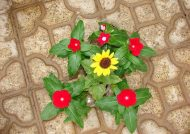 کاشت گل ناز با روش های ساده در منزل