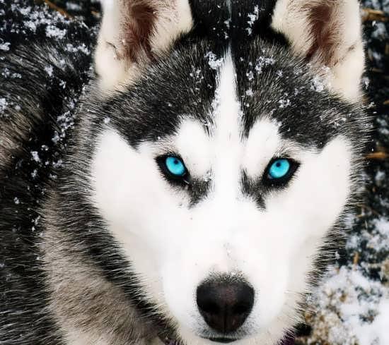 پروفایل زیبا از گرگ