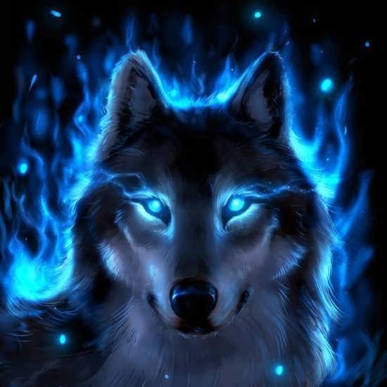 عکس پروفایل بسیار زیبا از گرگ