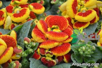 پرورش گل های زیبا
