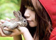 آگاهی درباره تربیت خرگوش