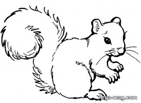 نقاشی کشیدن سنجاب