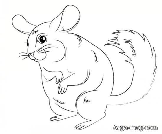 نقاشی حیوان سنجاب