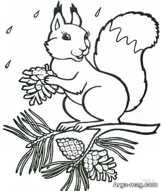 نقاشی جذاب سنجاب