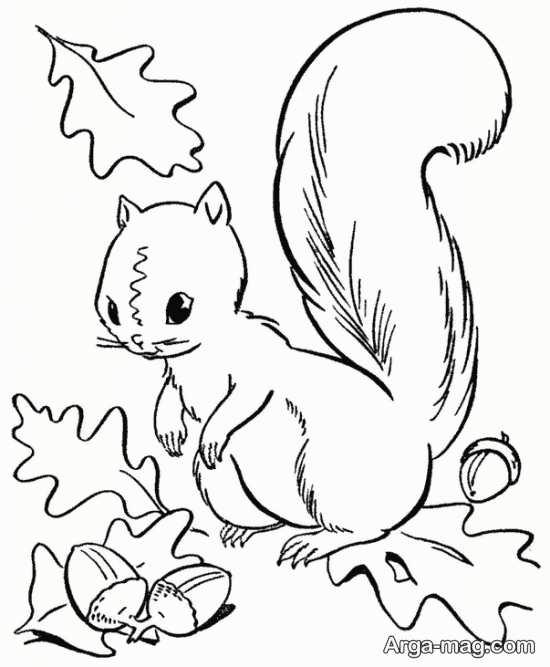 نقاشی زیبای سنجاب