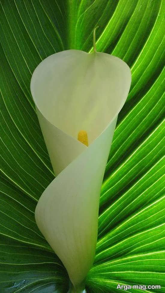 تصویر دیدنی از گل های عجیب