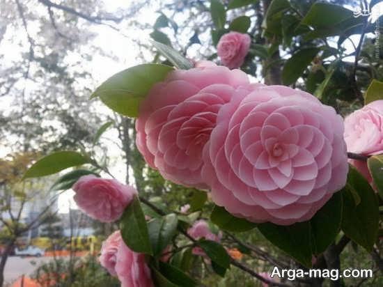 عکس گل ها در اشکال عجیب