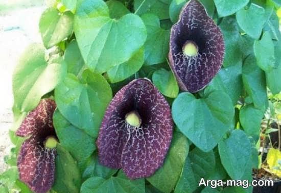 عکس جذاب و جدید گل های عجیب